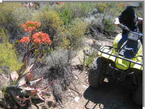 Planning your  quad bike trip will make it enjoyable